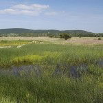 Kornyi tó